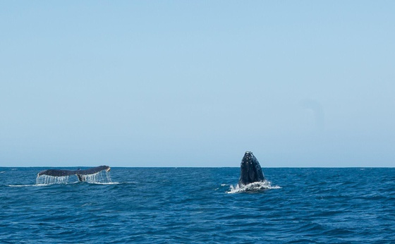 Whale Watcher Tours